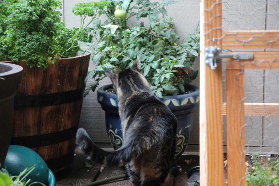 tabs-cat-outside-cat-enclosure-3