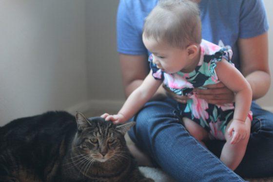 tabs-cat-connorclaire-8