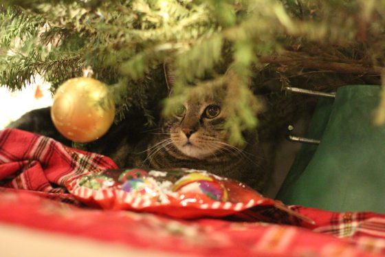 Tabs the Cat, Christmas 2016