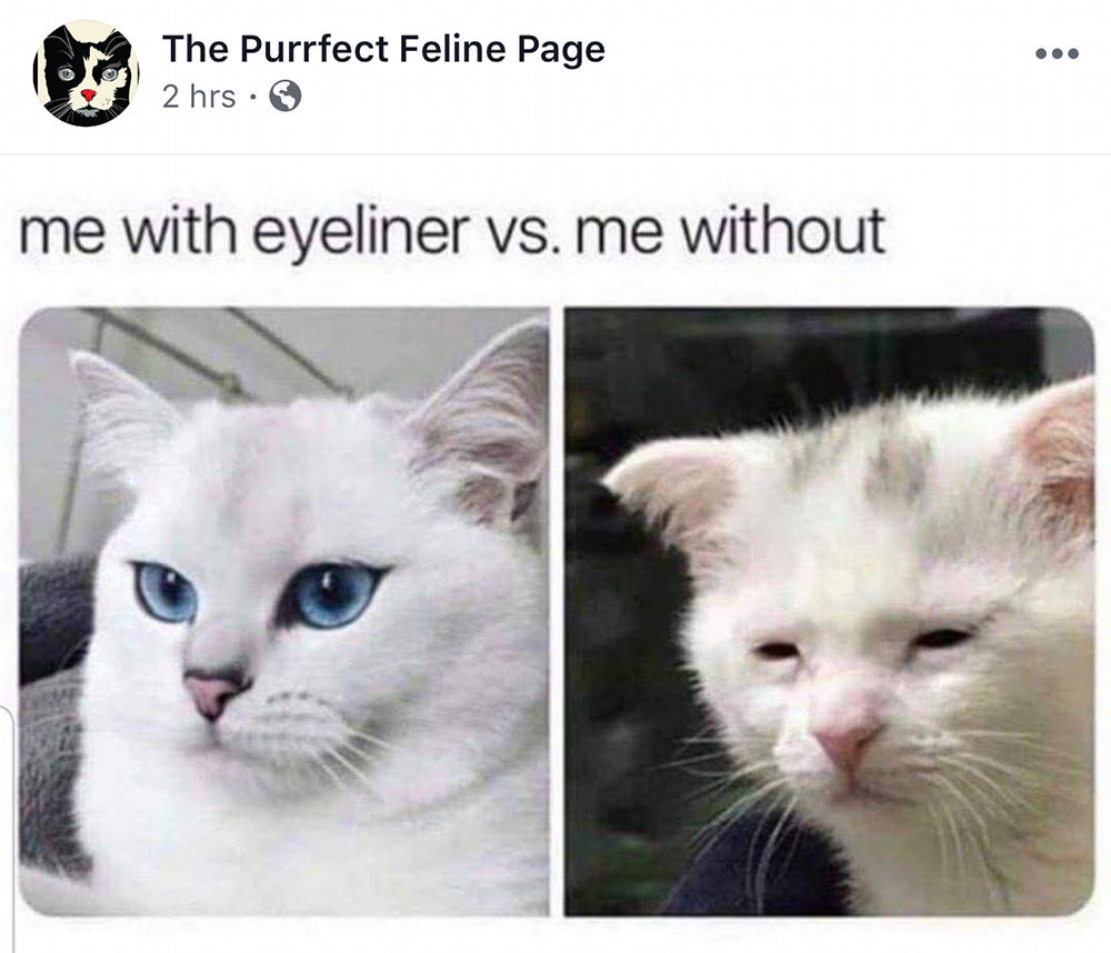 purrfect feline eyeliner