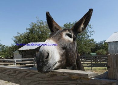 Marriage Advice from a Mule