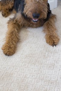 Best Type Of Carpets For Pets - Home The Honoroak