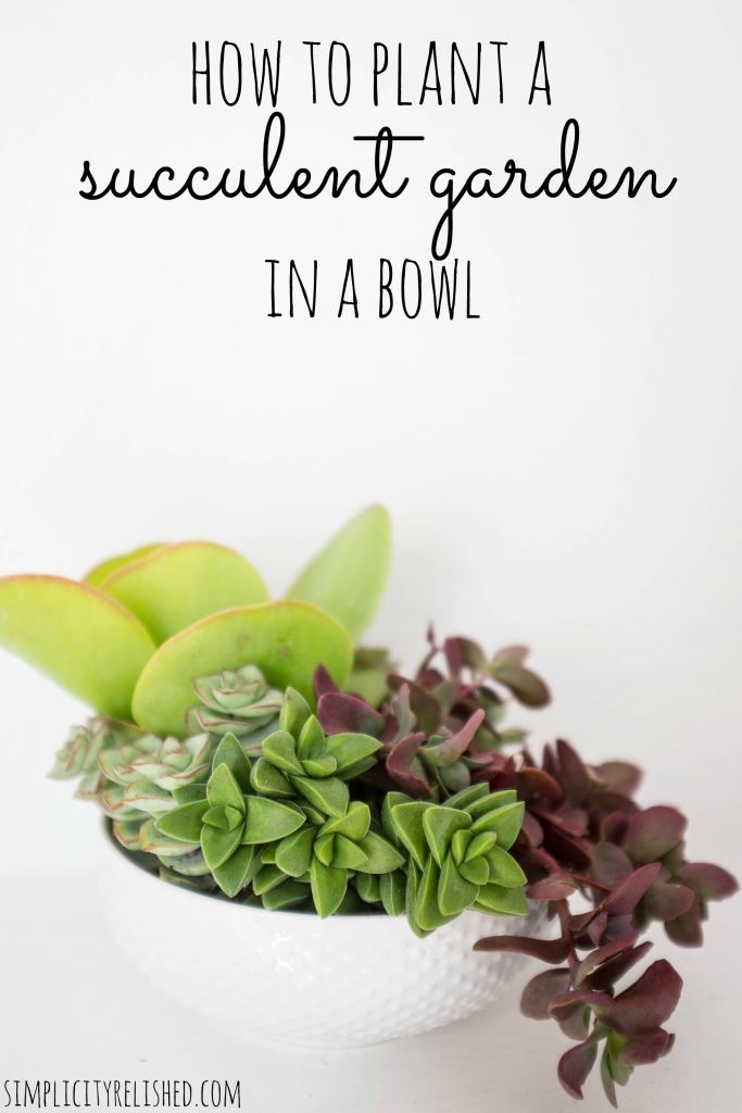 How to plant a succulent bowl