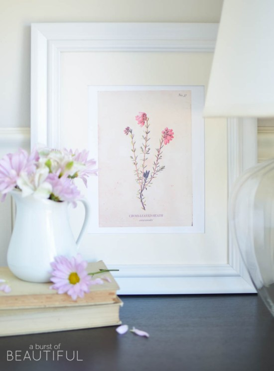Free Vintage Botanical Inspired Prints