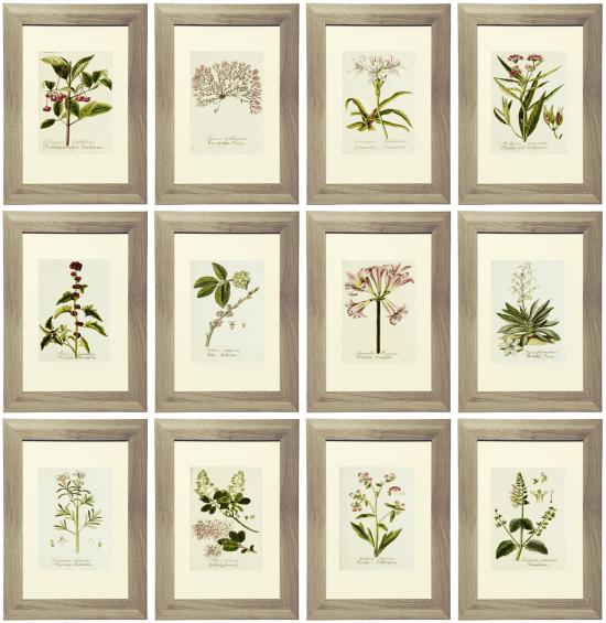Free Lavender Botanical Prints