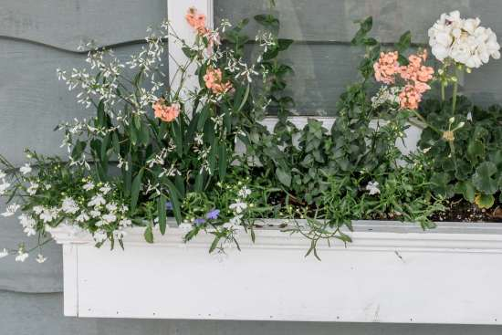 flowers, window box