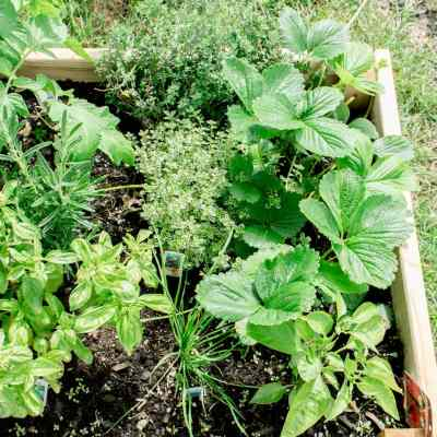 Our First Vegetable Garden – July Update
