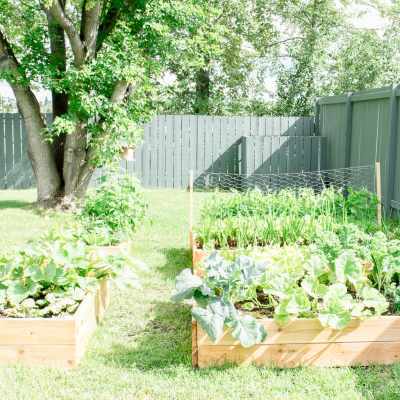 How to Build your own DIY Raised Garden Bed