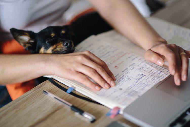 working-calendar-planning-dog