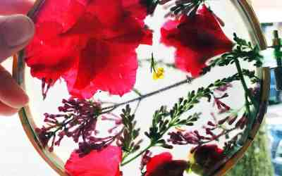 Kid Craft: DIY Suncatcher using Real Flowers