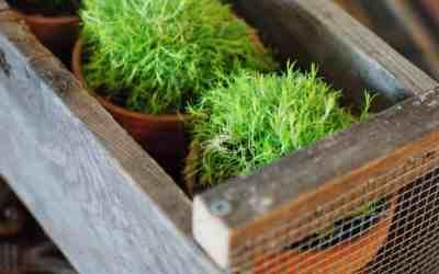 18 Creative DIY Planter Ideas