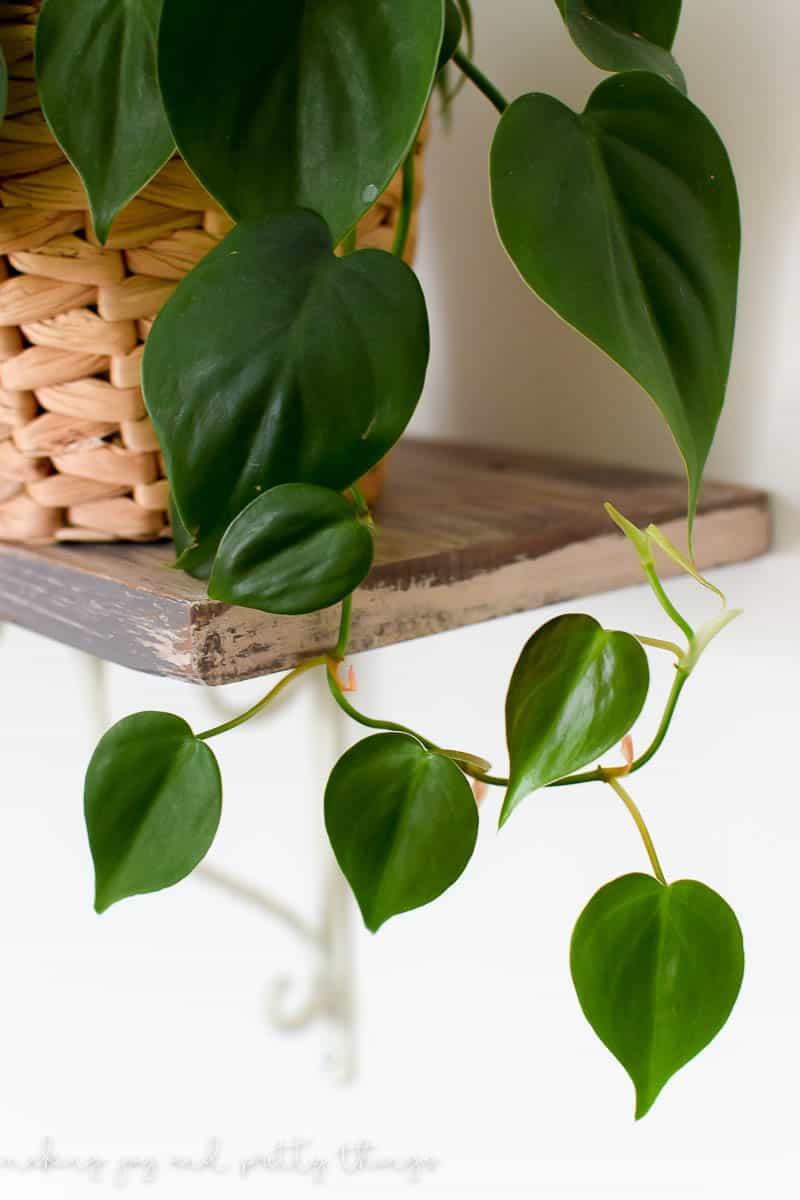Exceptional Black Thumb Plants Black Thumb Gardening Indoor Plants Indoor Plants Decor