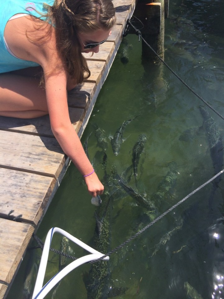 Feeding the tarpon at Robbie's Marina