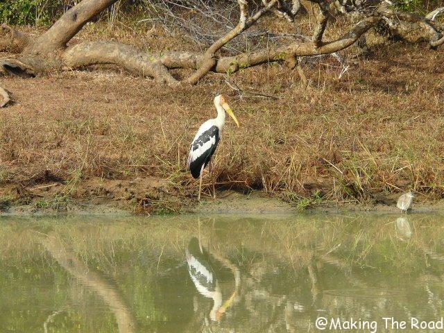 parc national yala sri lanka safari