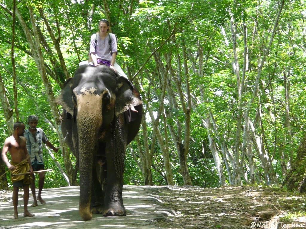 promenade a dos d elephant sri lanka