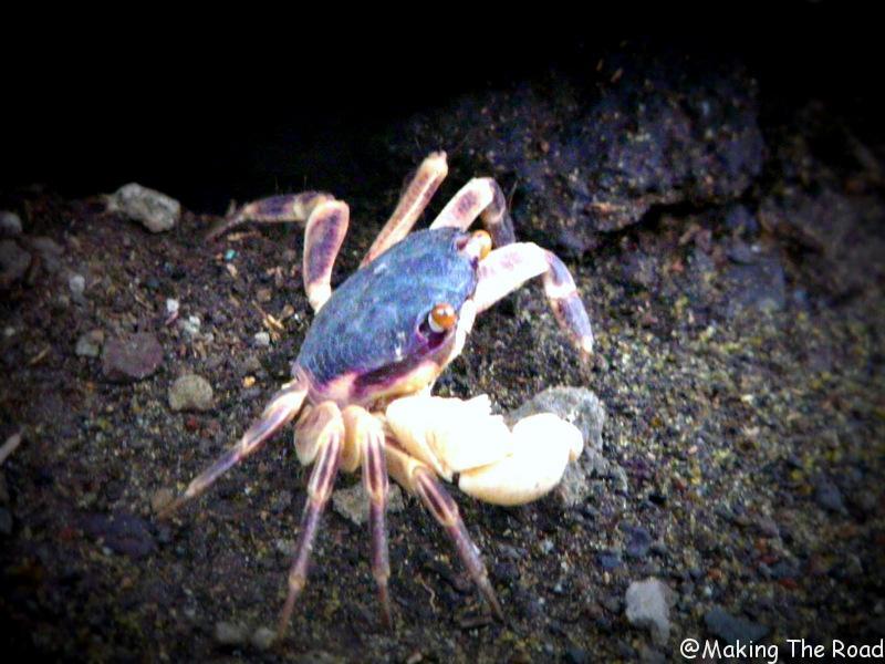 itinéraire réunion 3 semaines plage de grand anse crabe
