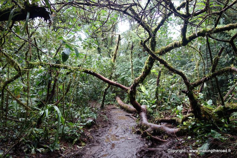 randonnée parc national volcan tenorio costa rica