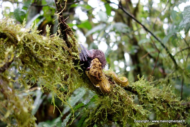 serpent randonnée parc national volcan tenorio costa rica