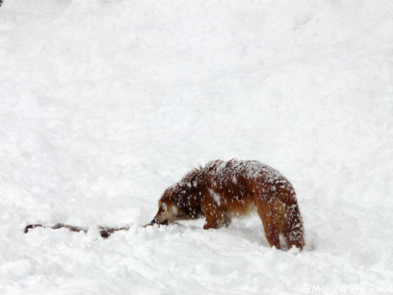 itineraire en inde en hiver fevrier faire du ski solang Nullah