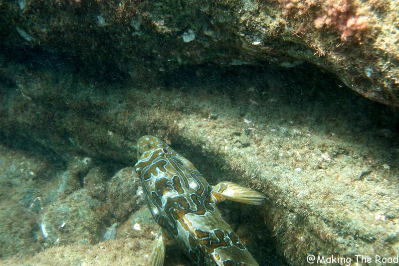 snorkelling costa rica bahia drake