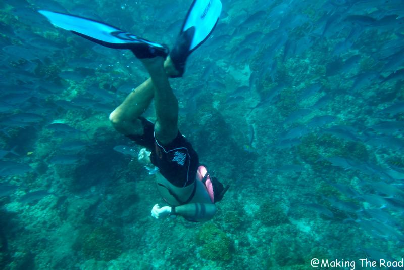snorkeling isla del cano excursion