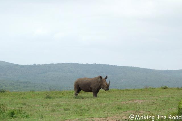 Hluhluwe Umfolozi safari rhinoceros