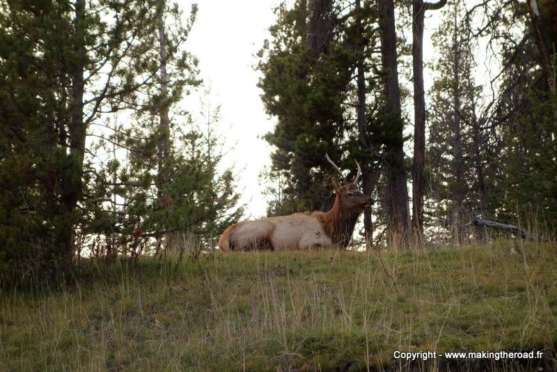 randonnée facile jasper voir des cerfs canada