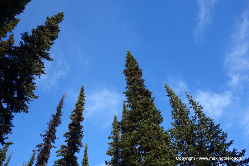 randonnée parc national mont revelstoke