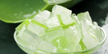 Aloe vera health benefit