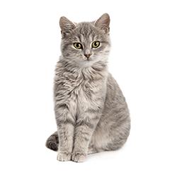 pet supplies household pet