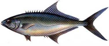akya Türkiye'deki balık çeşitleri nelerdir?