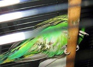muhabbet kuslari diski Muhabbetimiz Muhabbet Kuşları