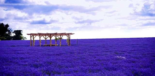 Provence-France Renkli ve İnanılmaz Dünya Manzaraları