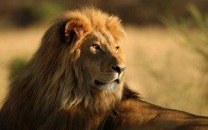aslan İlginç Bilgiler -2
