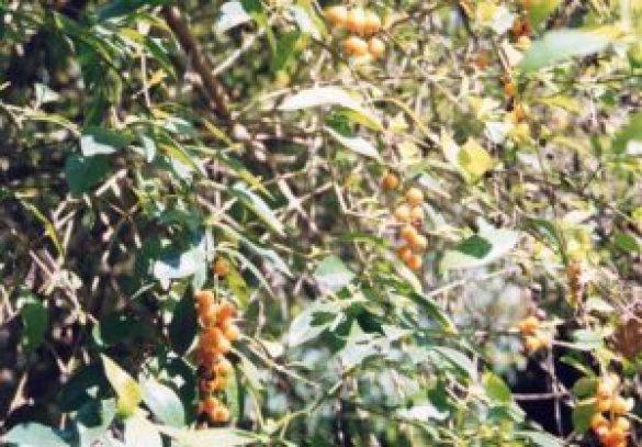 Doğada Yenebilen Bitkilerin Özellikleri