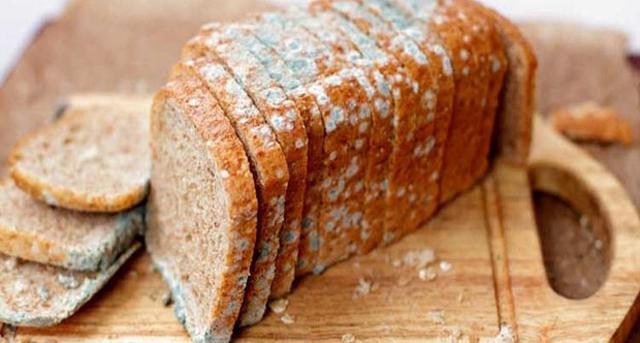 Ekmek Neden Küflenir?