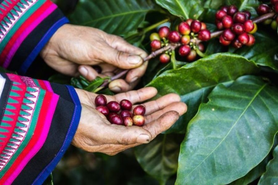 Kahve Unu Nedir? Kahve Unu Nerede Kullanılır?