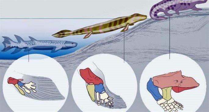 Biyolojik Türler Nasıl Ve Ne Şekilde Gelişti?