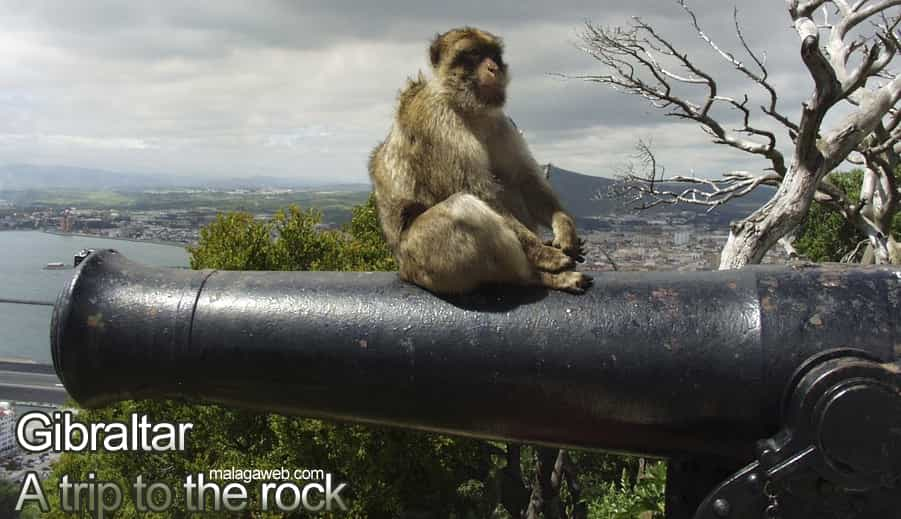 A trip to Gibraltar and monkey sitting
