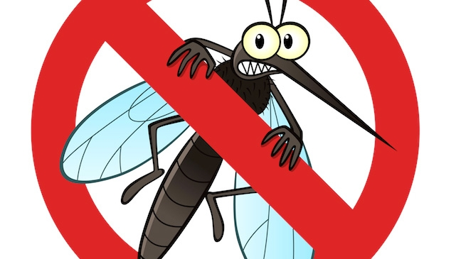 Avoid mosquito bites and get rid of them in Summer in Malaga