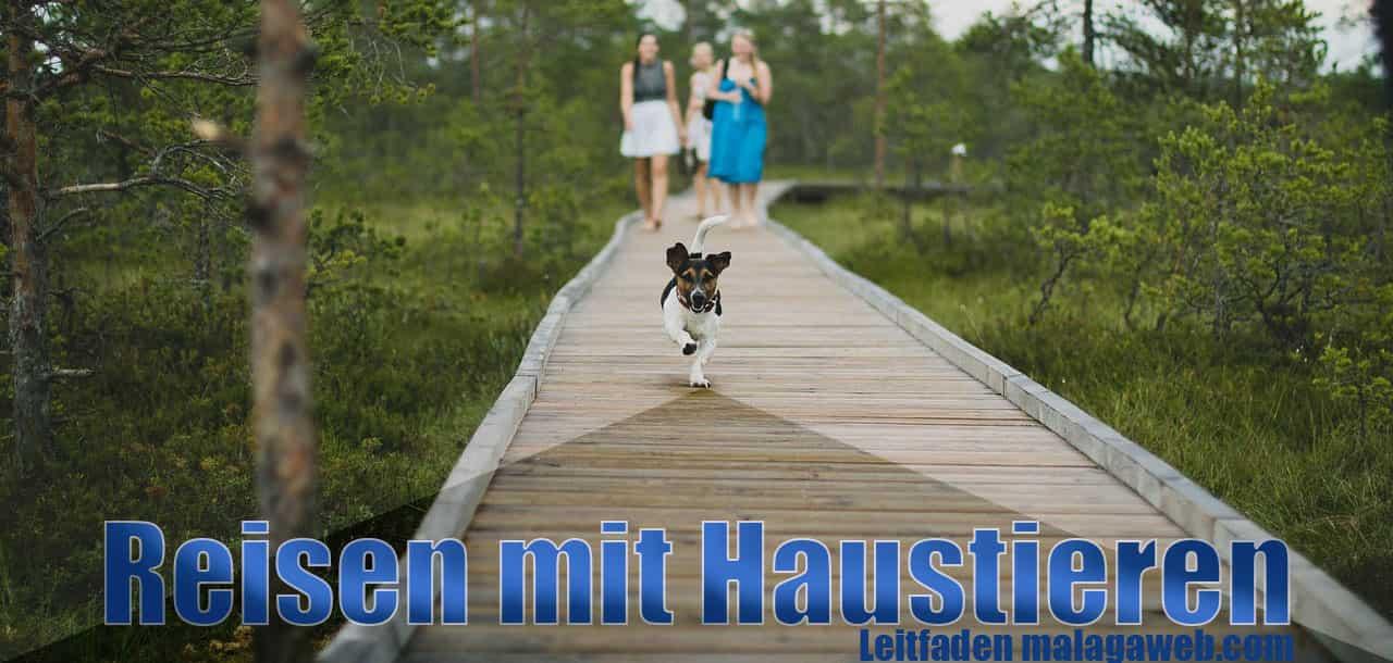 Reisen mit hund und haustieren
