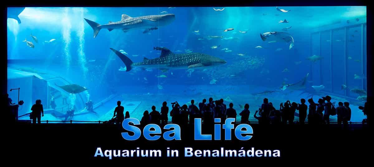 Sea Life Aquarium in Benalmádena
