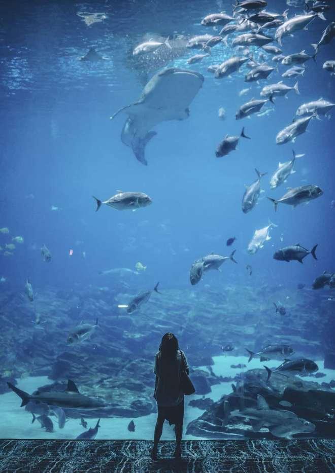 tiburones vistos desde acuario submarino