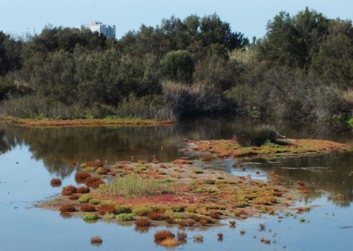 Desembocadura del río Guadalhorce