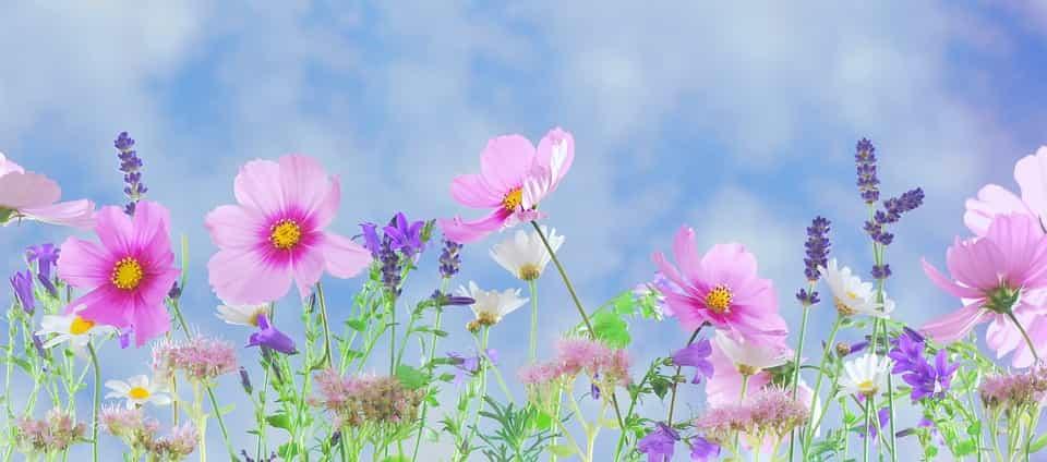 Equinoccio de Primavera y flores