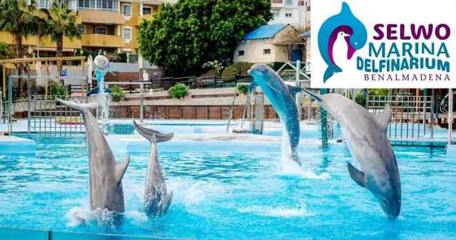 Dolphins in Selwo Marina