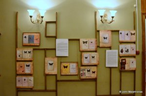 Part of Nabokov's butterfly collection