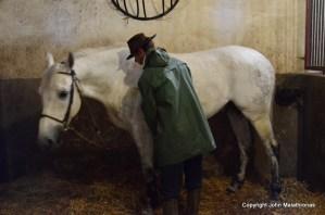 Cluny horses