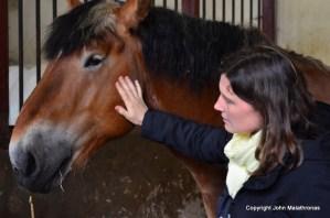 Clunus Haras cheval