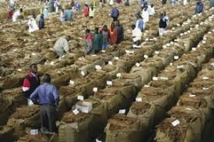 Auction Floors:  Farmers opt for vendors or smuggling